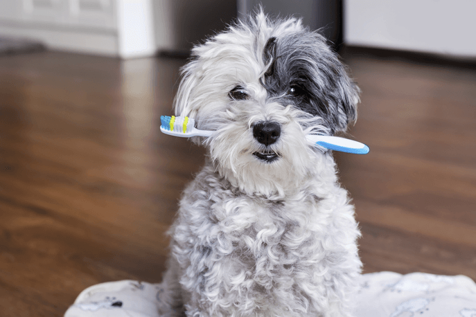 What To Expect At Your Pet's Dental Cleaning